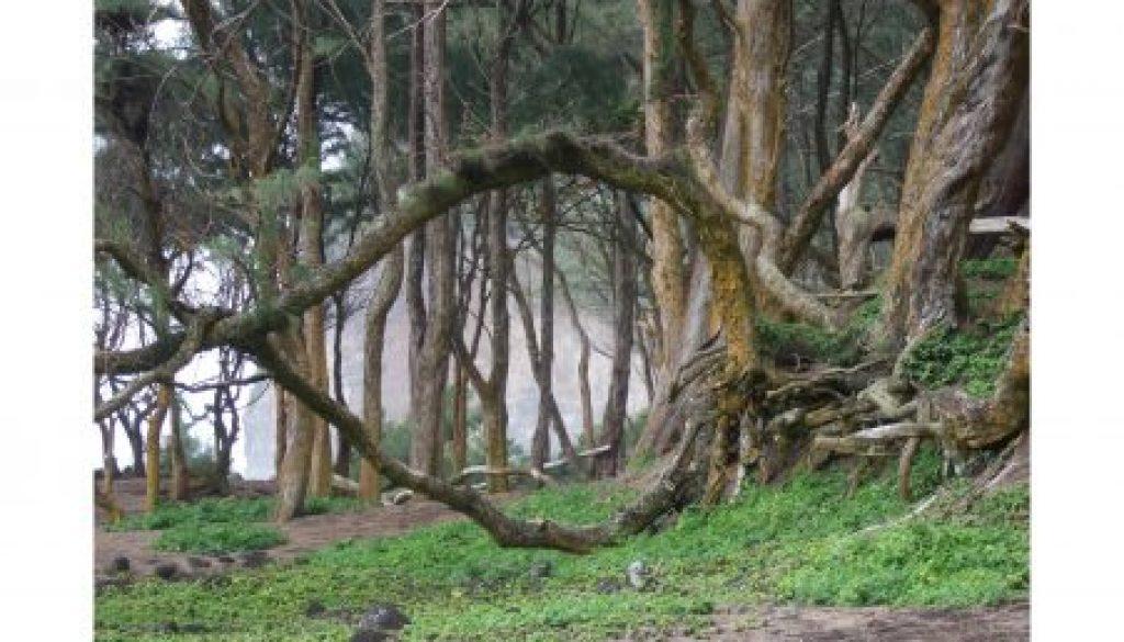 pololu_hobbit_portal