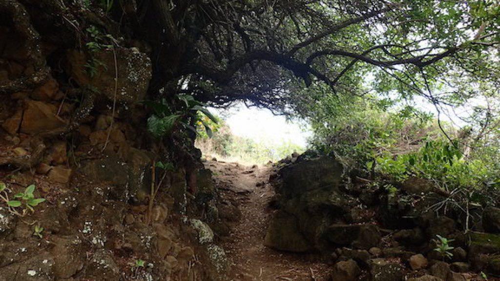 portal_woodhole