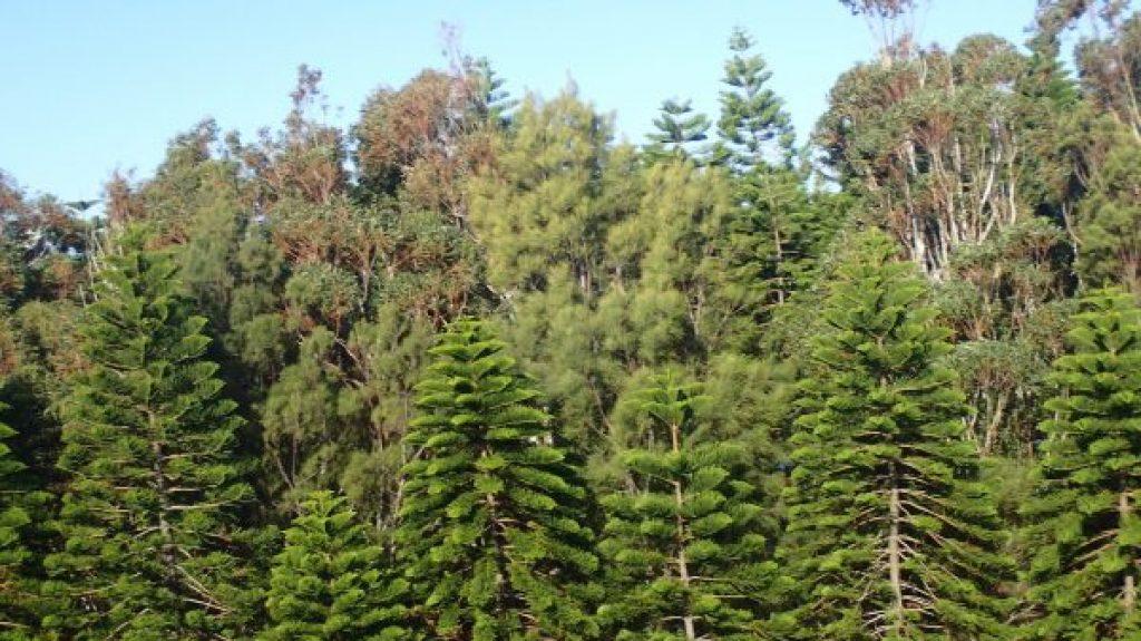 dancing-trees-birds-eye-view