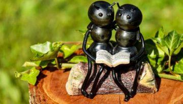 ants_reading