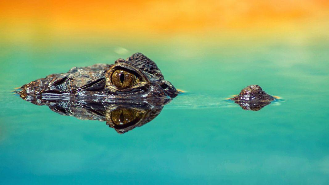 croc-snout