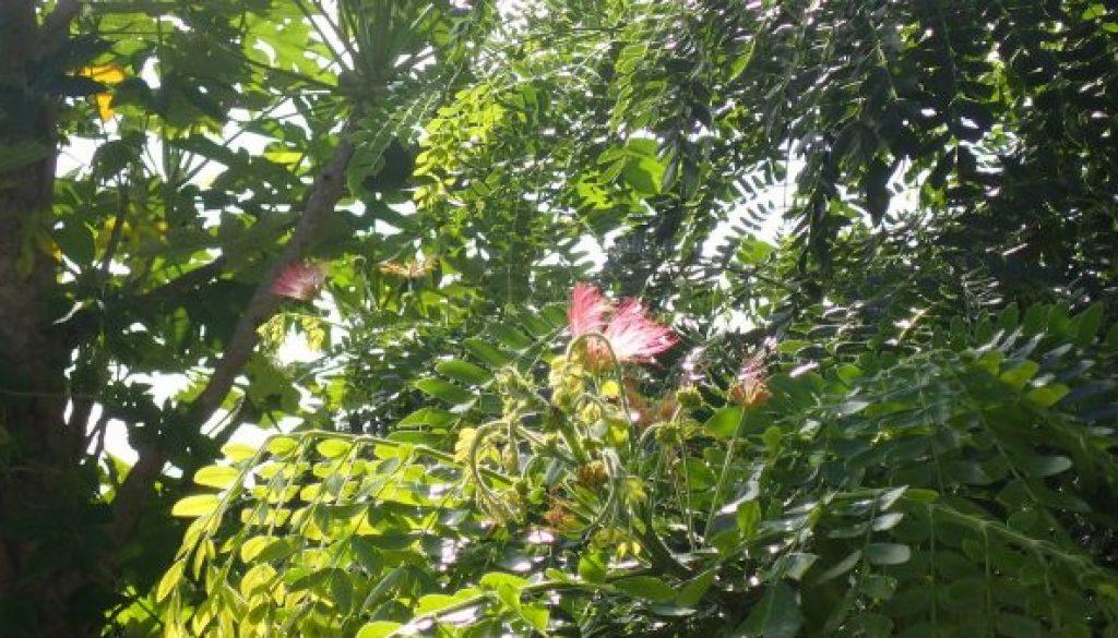 flowering-beauty-butterfly-hiding