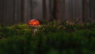 forest-macro-mushroom-33350
