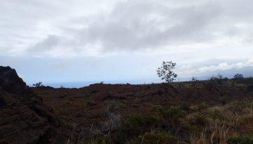 Tree Backlit Under Cloud