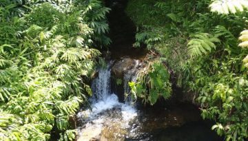 brook_waterfall