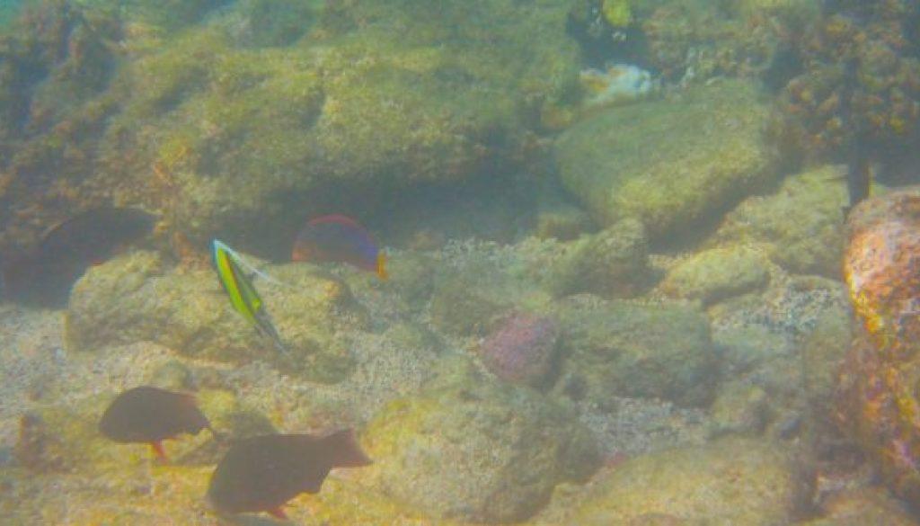 colorful_fish