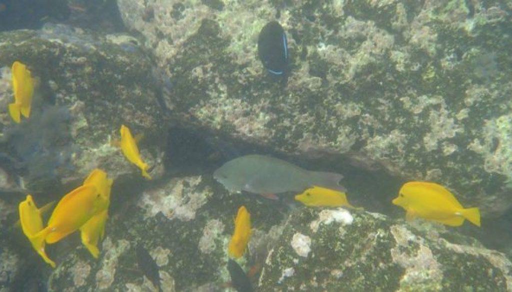 fish-consortium