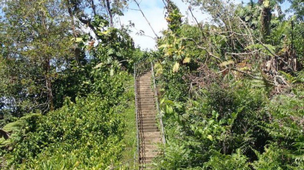 jungle-stairs